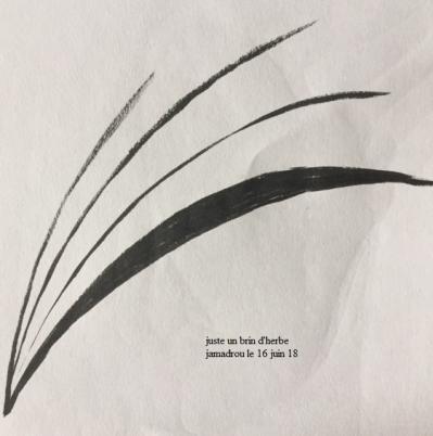 Brin d herbe