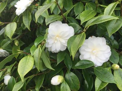 Fleur du jour1