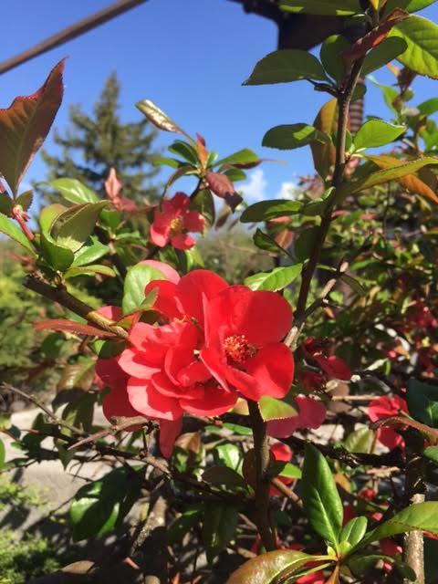 Fleurs5 1
