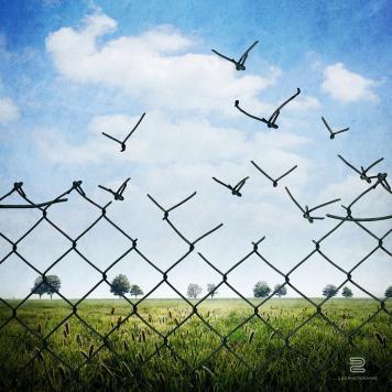 Grillage et liberte