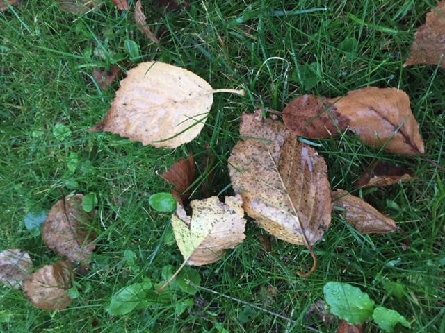 Herbe feuilles et pluie