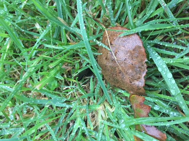 Herbe feuilles et pluie2