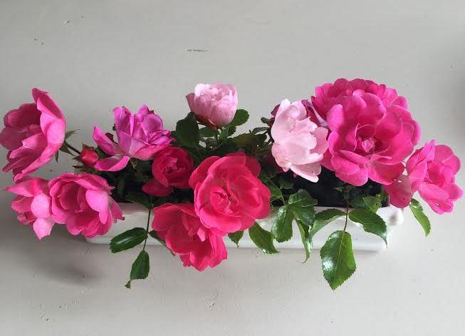 Juste des petites roses 1