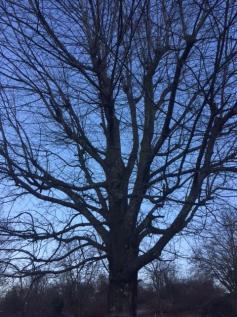 L arbre a froid