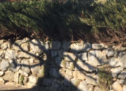 L ombre d un arbre