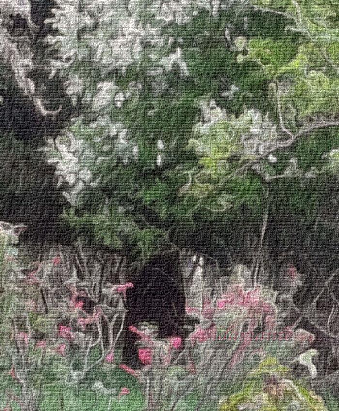 Le jardin des feesok