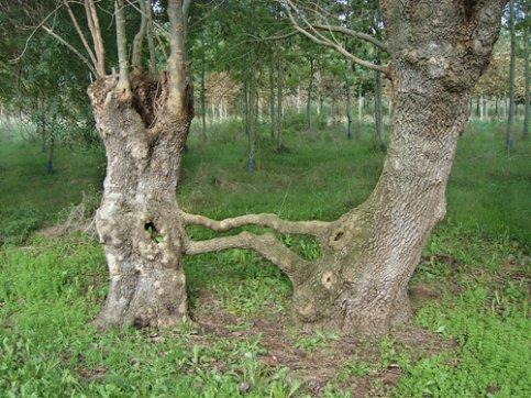 Les arbres se donne la main