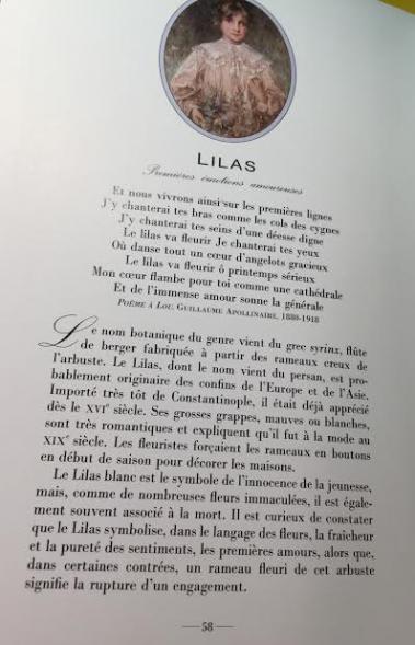 Lilas3