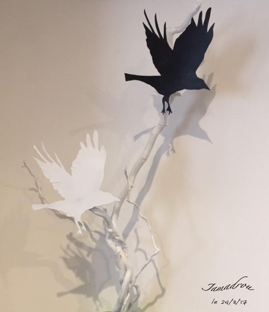 Oiseau blanc oiseau noir