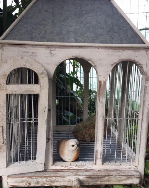 Oiseau poete insoumis