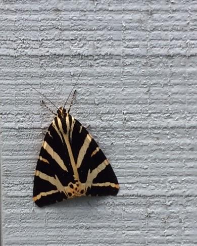 Papillon0 1
