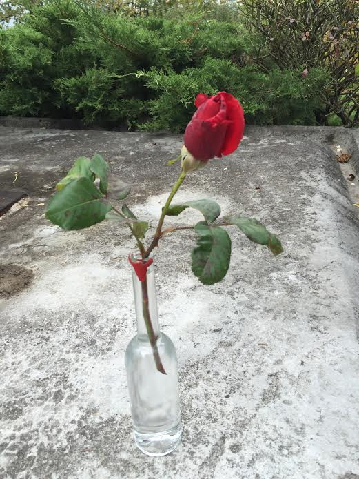 Rose rouge sang 1