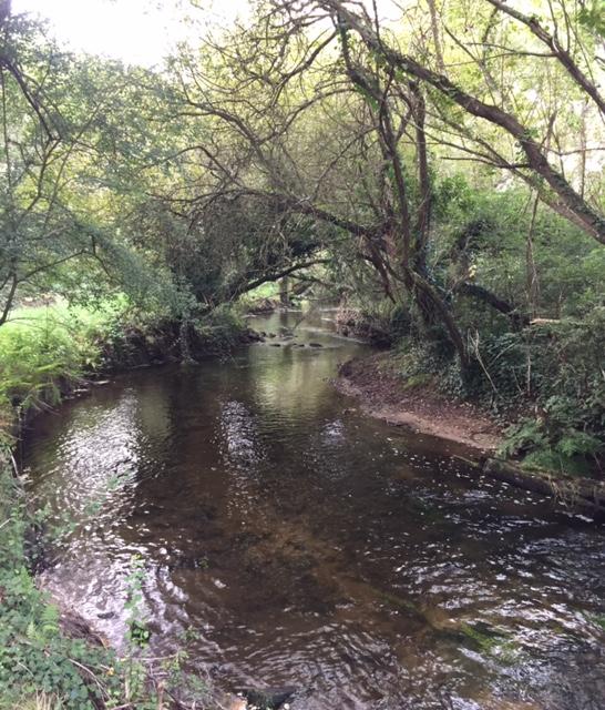 Ruisseau5