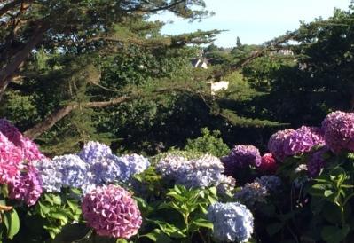 Soir hortensia 4