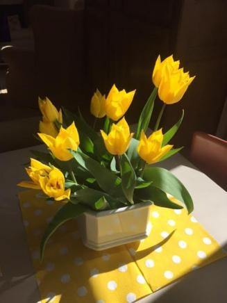 Soleil et tulipes