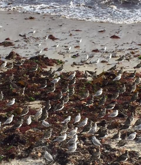tant d'oiseaux